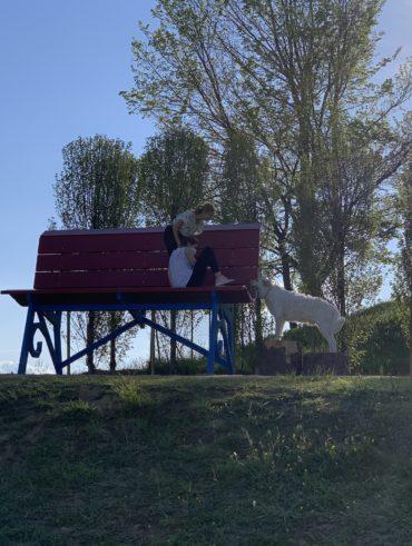 Colline Novaresi: una gita enogastronomica a due passi da Milano